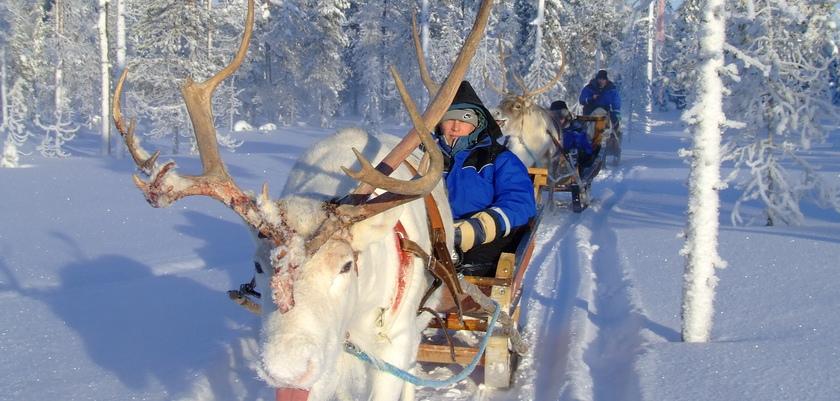 finland_lapland_yllas_reindeer (3).JPG